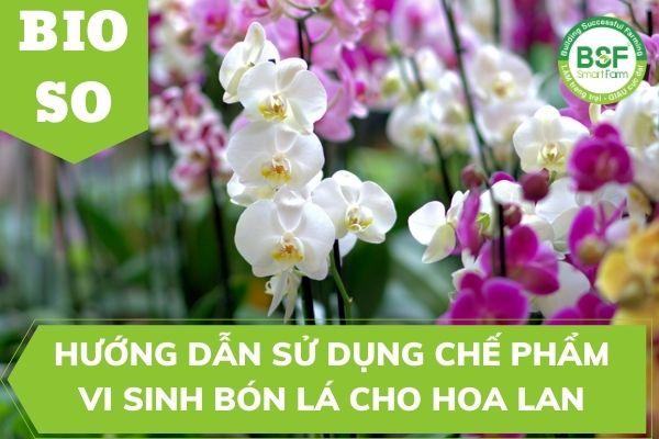 Hướng Dẫn Sử Dụng Chế Phẩm Vi Sinh Bón Lá BIO SO Cho Hoa Lan