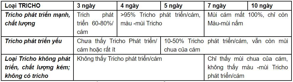 Hình ảnh nấm trichoderma