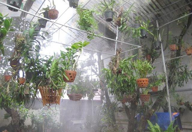 Cách tưới nước cho phong lan như thế nào là khoa học nhất?